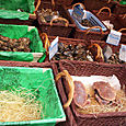 Market_fish5_oysters