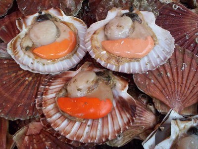 Coquilles St Jacques ~ Scallops ~ at the Place Monge market in Paris