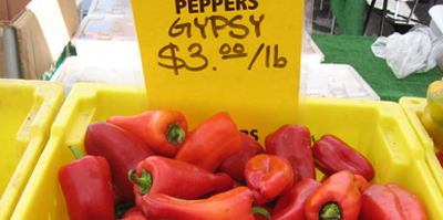 Berkeley_peppers6