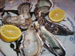 Fci_wepler_oysters_250_1